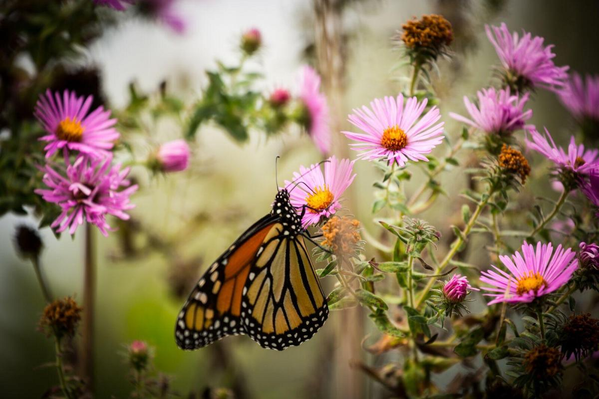Monarch Gardens Made In The Neb